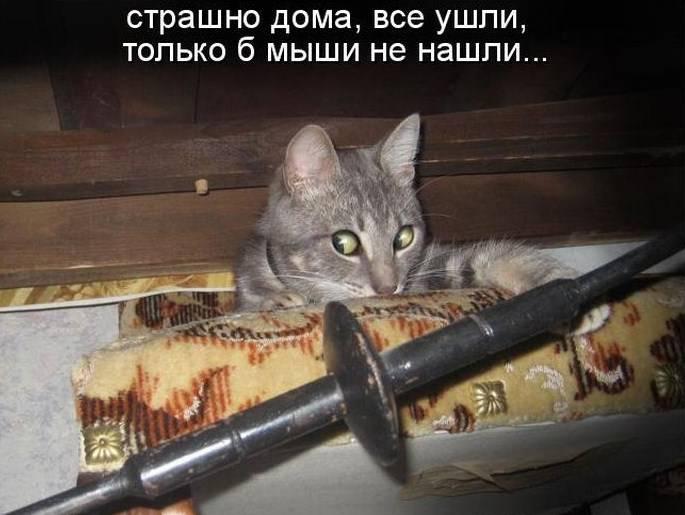 кот и миши, мем