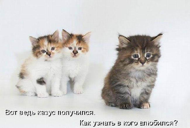 любовь на троих, мем