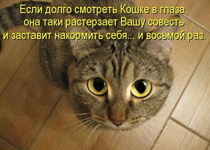 Изображение выглядит как кот, пол, внутренний, укладывает  Автоматически созданное описание