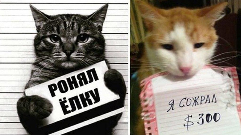 котиков поймали с поличным, мем