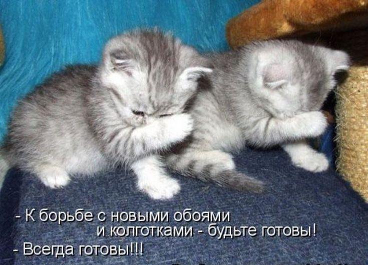 Изображение выглядит как кот, внутренний, животное, млекопитающее  Автоматически созданное описание
