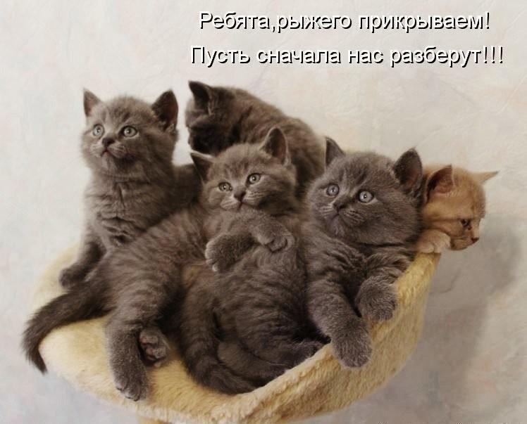 котята, мем