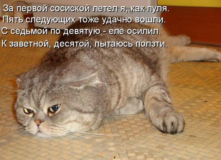 сосиска и кот, мем